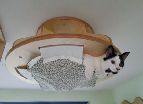 cat ceiling hung bed