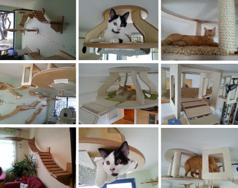 3d Cat Furniture Set Modular Hangouts For Walls