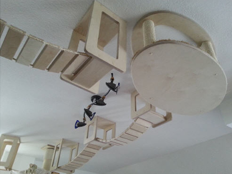 cat hanging aerial walkways