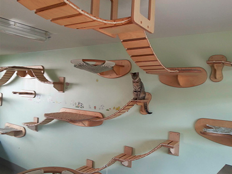 cat interior room design