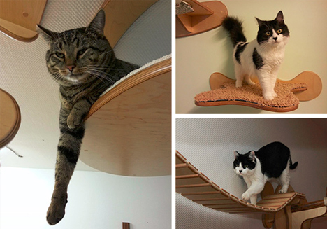 cat lounge furniture system