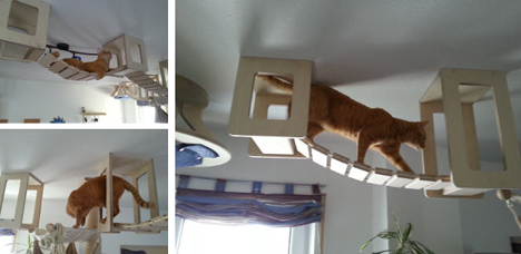 cat sky suspension bridge