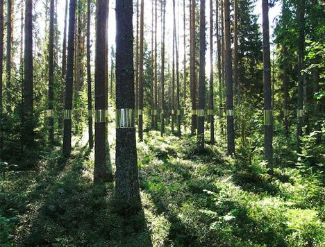 invisible tree art installation