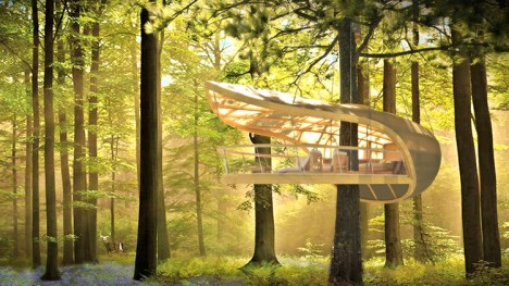 tree house hanging forest