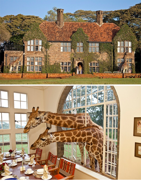 Weirdest Hotels Giraffe Manor