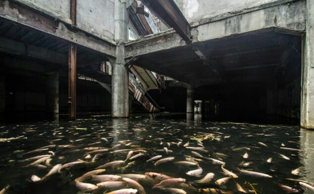 Metro Koi Thousands Of Fish Occupy Abandoned Bangkok Mall