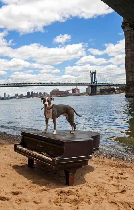 abandoned piano East River