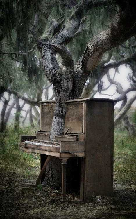 abandoned piano tree Mifflin