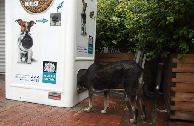 Stray Animal Vending Machine 1