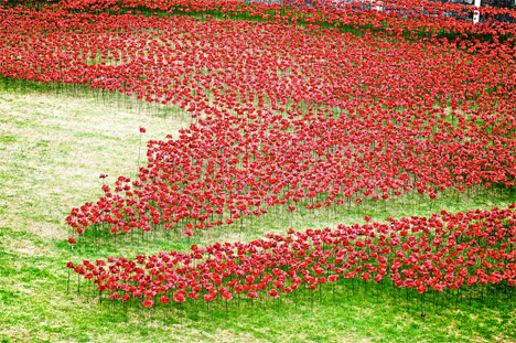 Tower of London Poppies 3