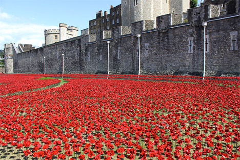 Tower of London Poppies 6