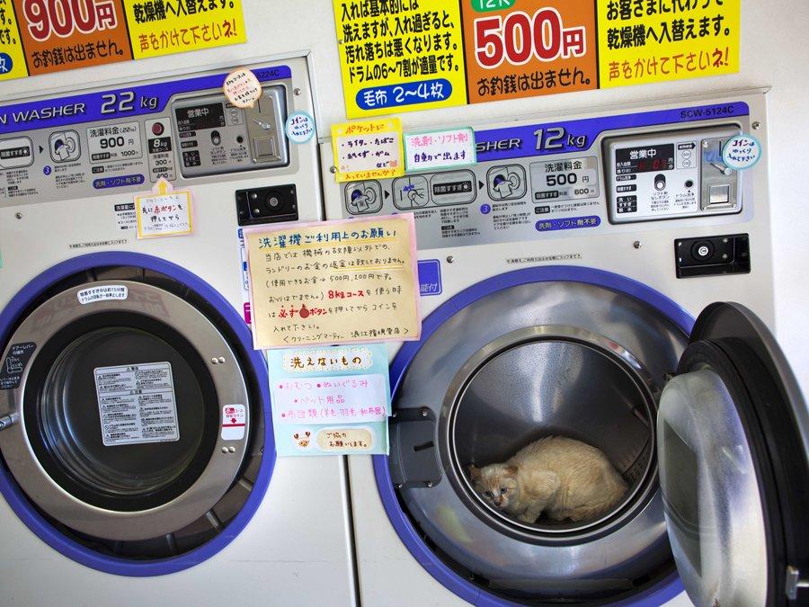 abandoned laundromat Namie Japan cat