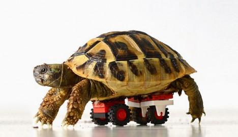 strange LEGO tortoise wheelchair