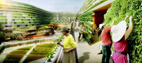 urban farm gardening community