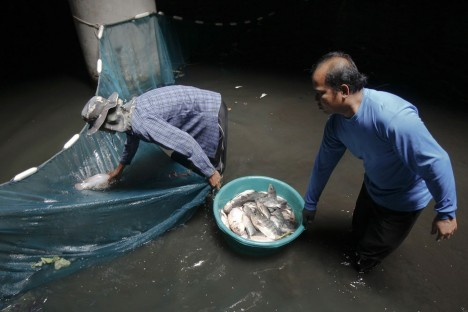 abandoned mall fish buckets