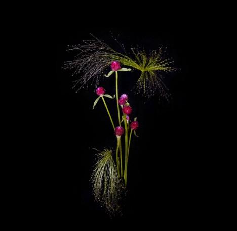 flower burst light dark