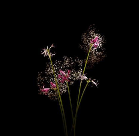 flower green white buds