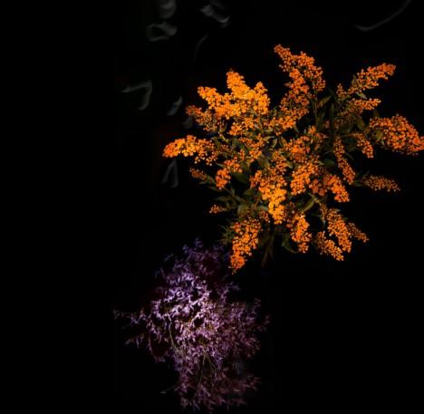 flower orange purple explode