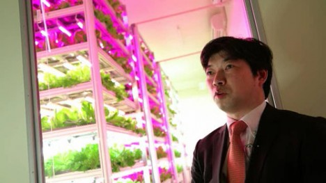 indoor farm interview detail