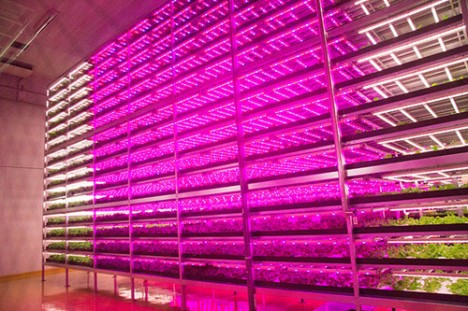 indoor future led farming
