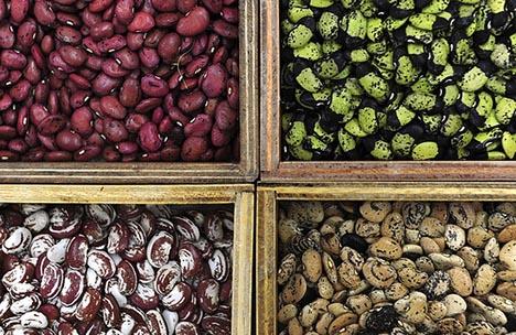 seed vault types varieties