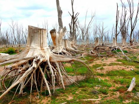 sunken village washed roots