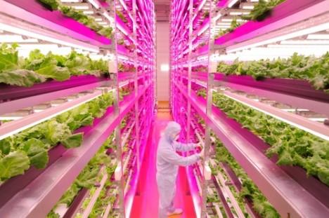 worlds largest indoor farm