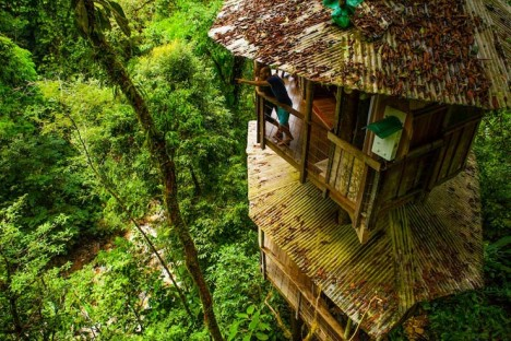 The High Life 12 Incredible Residential Tree House