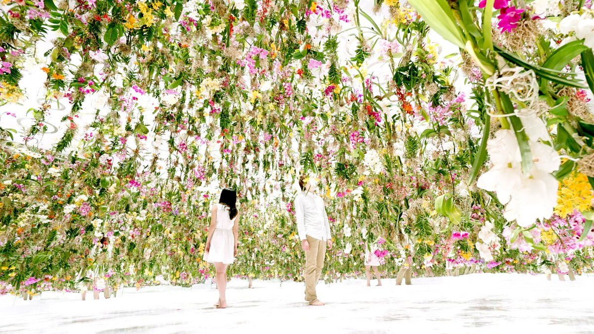 2,300 Floating Flowers: Interactive Garden Makes Way as You Walk