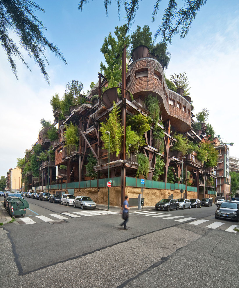 urban treehouse forest plants