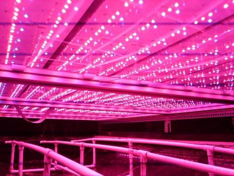 aerofarms hydpropnic indoor agriculture
