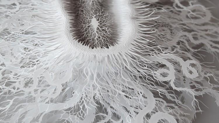 bacteria paper cut 1