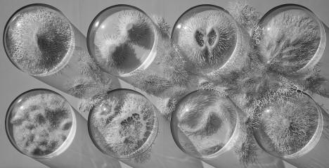 bacteria paper cuts 11