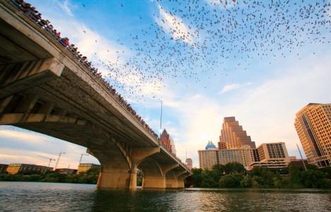 bridge bat experience austin