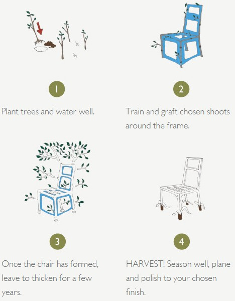 growing tree furniture set