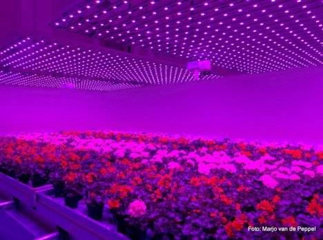 indoor farm red light