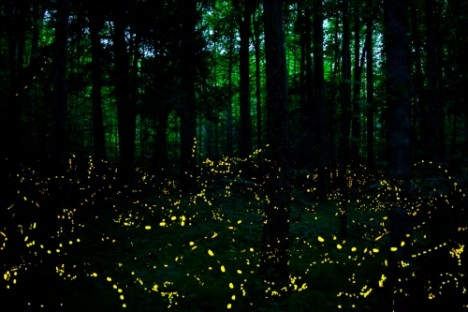 Nocturnal field trips 7 world wonders best explored at for Firefly lights urban