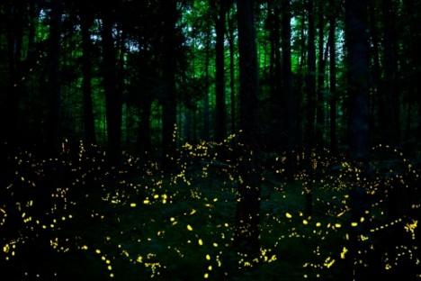 night lightning bug sync