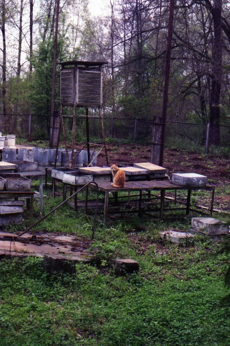 abandoned apiaries 3a