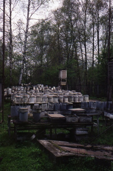 abandoned apiaries 3b