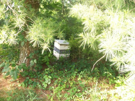 abandoned apiaries 4a