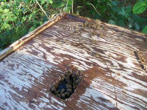 abandoned apiaries 4c
