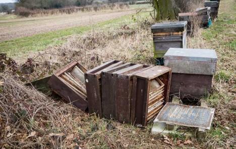 abandoned apiaries 5