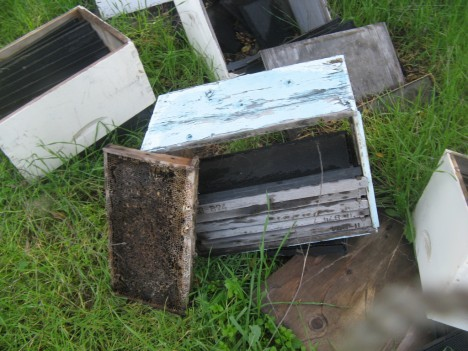 abandoned apiaries 6a