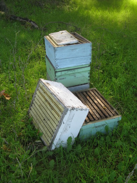 abandoned apiaries 6c