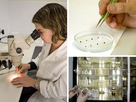 australian plantbank research
