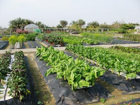 avrdc biodiversity crops