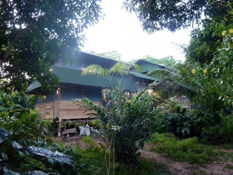 camino verde living seed bank jungle headquarters