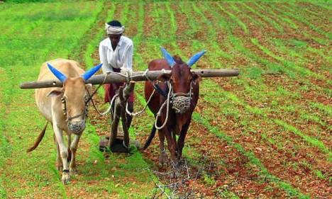 navdanya farming