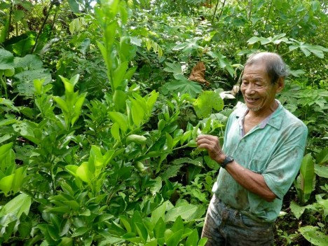 peruvian amazon reforestation
